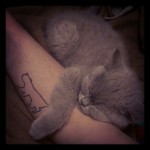 Cute Cat & Cat Tattoo