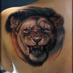 Lioness Shoulder Blade