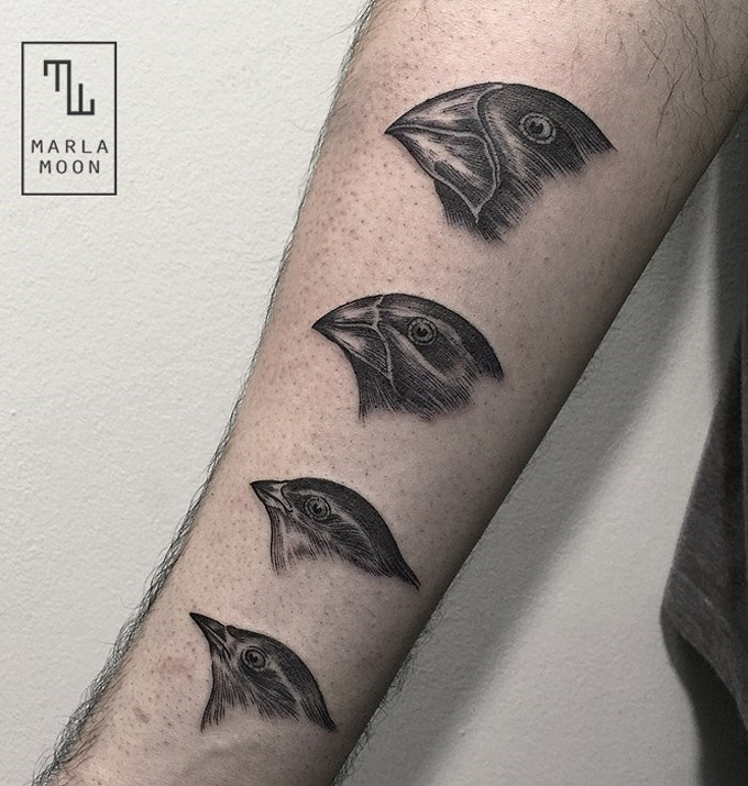 darwin 39 s finches illustration arm tattoo best tattoo