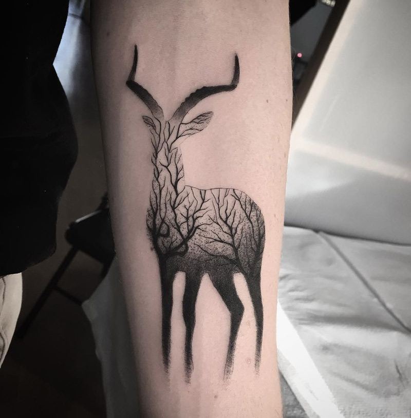 Gazelle & Branches