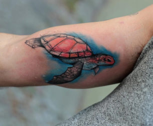 Cute Watercolor Turtle
