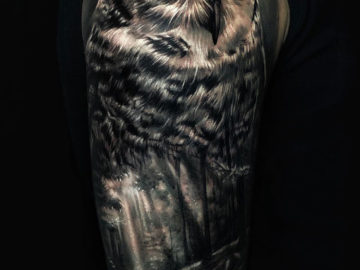 Owl & Forest